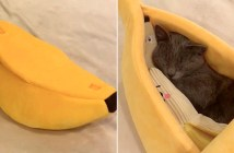 バナナと猫さん