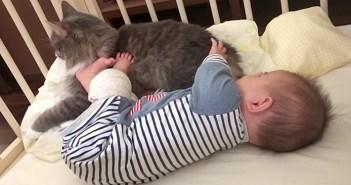 仲良しな赤ちゃんと猫さん