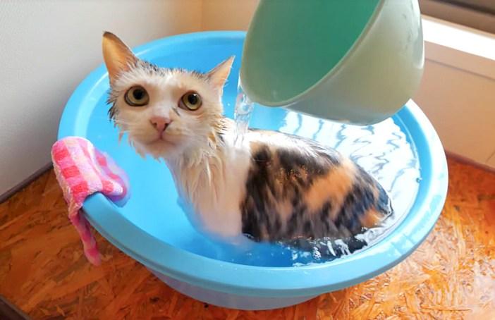 かけ湯される猫