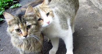 仲良しな猫達