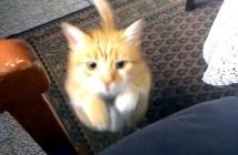 ジャンプする猫さん