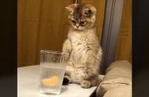 炭酸が気になる子猫