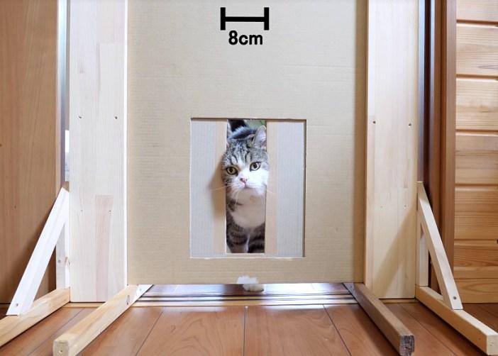 通り抜ける猫