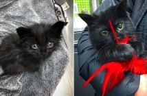 成長する子猫
