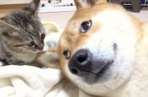 子猫と柴犬