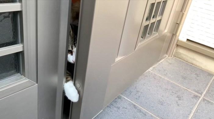 お出迎えする猫達