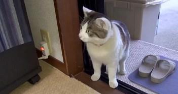 家に入ってきた猫