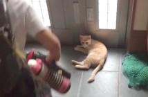 猫をかわす男の子