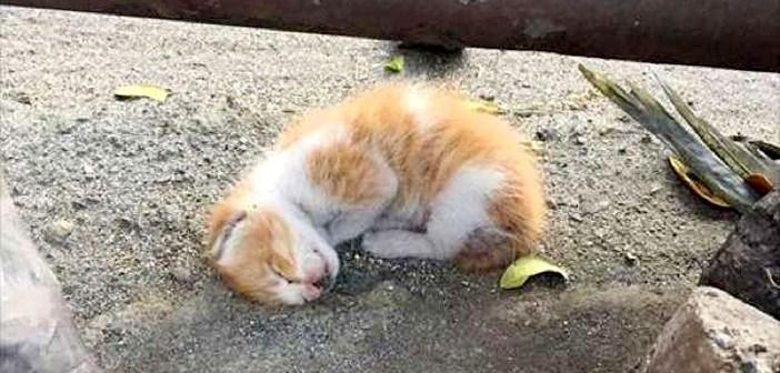 道路脇の子猫