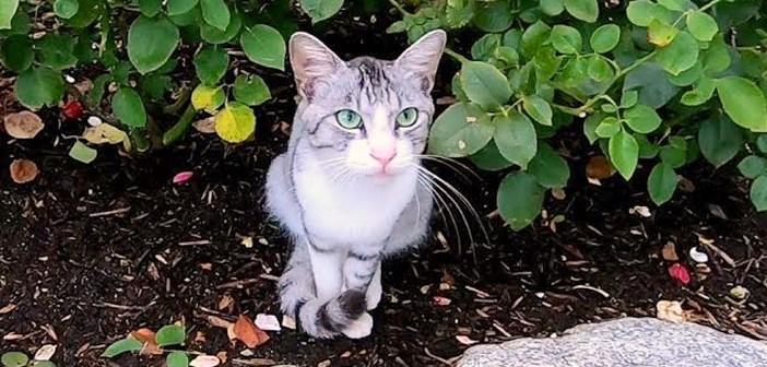 台風直後に公園に行くと野良猫が花壇で待っていた。どうやら伝えたいことがたくさんあったようで次々と話しかけてきた!