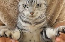 爪を切られた猫さん