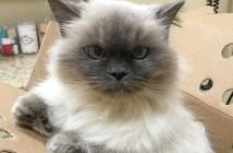 14歳の老猫