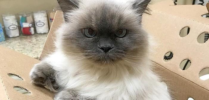 「迎えに来てくれたの?」14歳で家を失った老猫。保護施設に会いに来てくれた女性に出会うと、再び愛情を求め始める