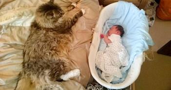 大きね猫と赤ちゃん