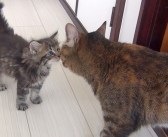 ある日、ひとりで庭に現れた迷子の子猫。保護された家で、9匹の先住猫と初対面する様子がとっても可愛かった (*´ω`*)♡