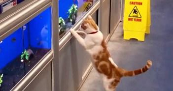 ペットショップ好きの猫