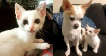 保護された子猫と犬