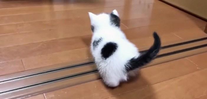 冒険する子猫