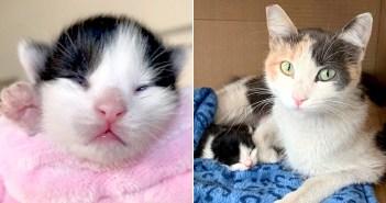 助け出された母猫と子猫