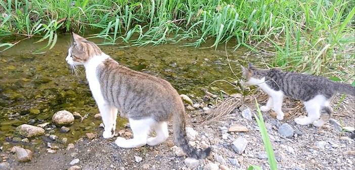 川の渡り方を教える母猫
