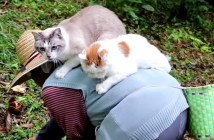 猫とおばあちゃんと栗拾い
