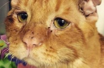 悲しそうな顔の猫