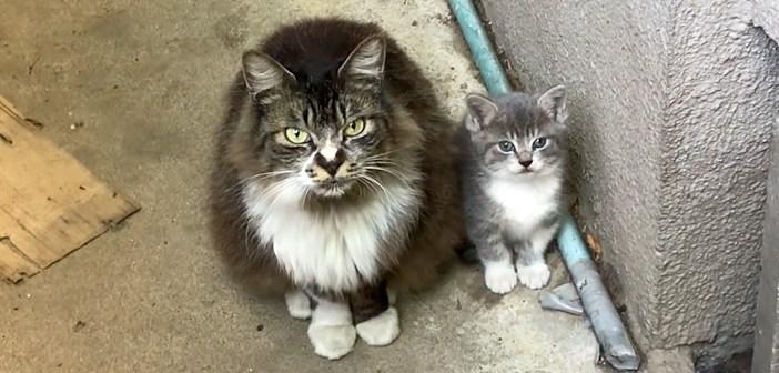 子猫を託してきた母猫