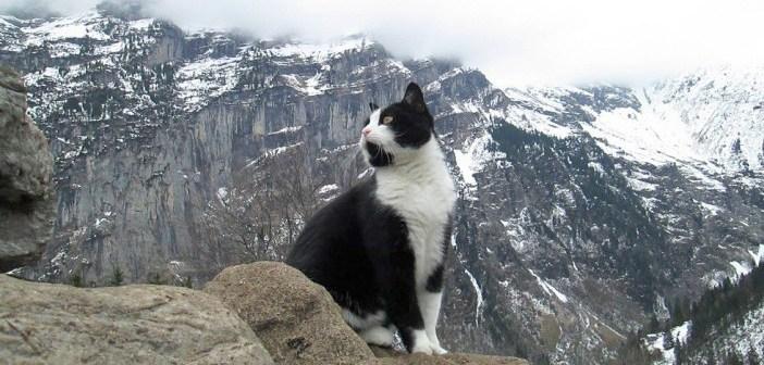 山で出会った猫