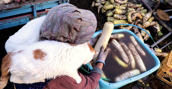 大根洗いと猫達