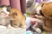 小さな子猫達