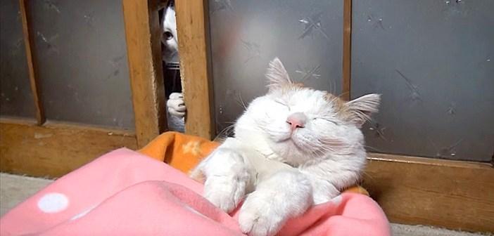 寝ていた猫