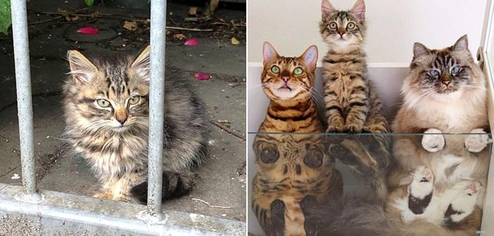飼い猫と一緒に散歩に出かけると、迷子の子猫にバッタリ遭遇! 猫達は一瞬のうちに仲良くなって、最高の兄弟に!