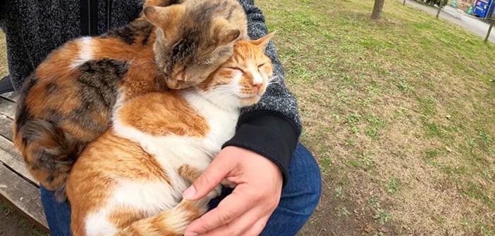 膝の上の猫団子