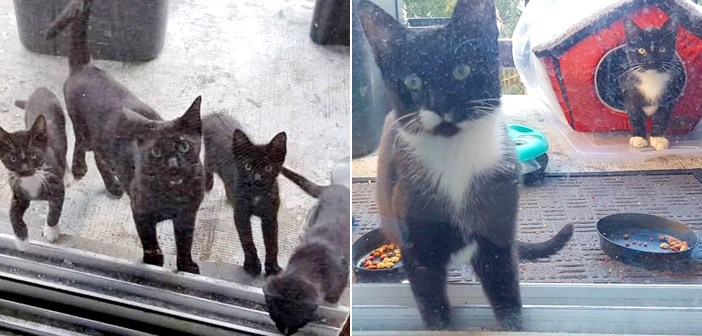 庭に来た猫の家族