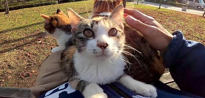 子猫をナデナデしたら膝の上に乗ってきた! と思ったら、次々と猫達が集まってきて、膝の上に猫団子が完成♪