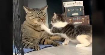 大人猫に猫パンチ