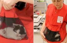 子猫専用ポケット