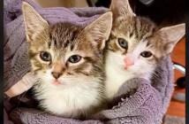 雪の中から保護された子猫達
