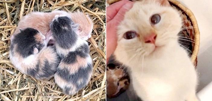 保護された母猫と子猫達