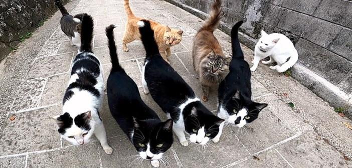 集まってくる猫達