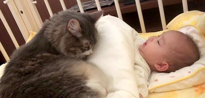 朝から赤ちゃんにべったりな猫さん