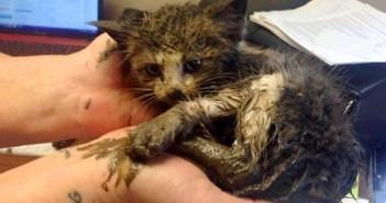 泥の中から助け出された子猫