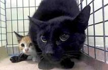 助け出された猫と子猫