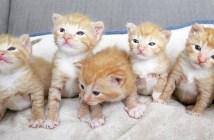 幼い子猫達