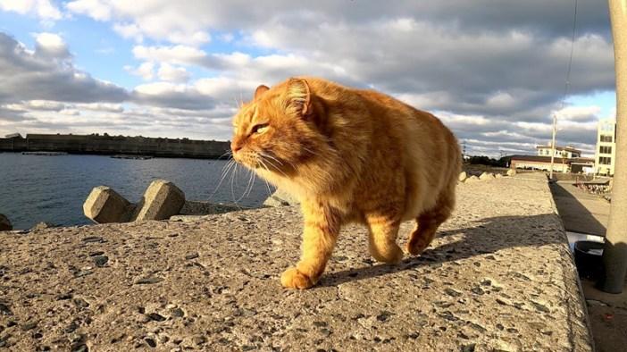 凛々しい猫