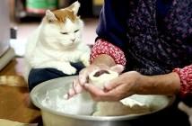 まんじゅう作りを見つめる猫さん