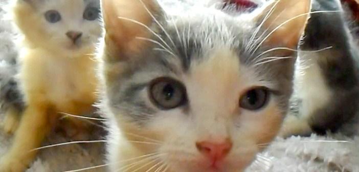 5匹の迷子の子猫達を保護してビックリ! なんと兄弟のうちの2匹は、オスの三毛猫でした (*゚0゚)!