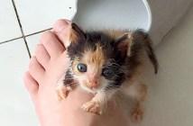 保護された小さな子猫