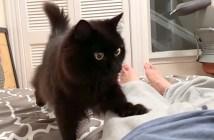 ベッドに案内する猫