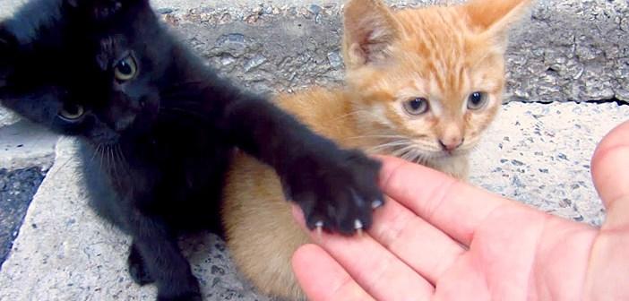 コンクリートの隙間に住んでいる元気いっぱいの子猫達。ご飯の時間に呼んでみると次から次へと可愛い姿が現れた (*´ω`*)